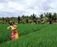 Indonesia, Bali, Balinese dancer in padi fields, trees in background - Jack Hollingsworth