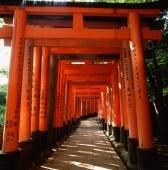 Japan, Kyoto, Fushimi Inari Shrine, Torii gates - Rex Butcher