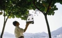 Man hanging birdcage on tree - Jade Lee