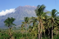 Indonesia, Bali, Mount Agung with palm trees in foreground. - Jill Gocher