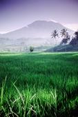 Indonesia, Bali, Rice paddies, Mt. Agung in background. - Jill Gocher