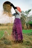 Vietnam, woman threshing rice - Jill Gocher