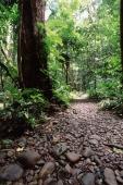 Malaysia, Sarawak, Mulu National Park, jungle path leading to Clearwater cave. - Jill Gocher