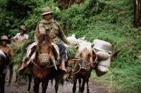 Indonesia, S. Sulawesi horsemen - Jill Gocher