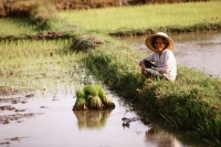 Thailand, Farmer resting after planting rice seedlings. - James Marshall