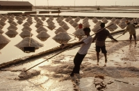 Thailand, Sea salt harvest in fields. - James Marshall
