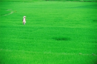 Vietnam, Danang, A worker spreading fertilizer in a rice field. - Steve Raymer