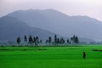 Vietnam, Qui Nho'n, Man walking across field, Troung Son Mountains in background. - Steve Raymer