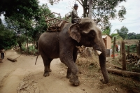 Vietnam, Ban Dong, Central Highlands, Man riding elephant. - Steve Raymer