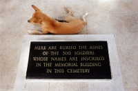 Thailand, Chung-Kai, A dog sitting by a stone marking the resting place of the ashes of 300 soldiers. - Steve Raymer