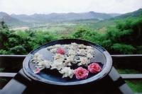 Thailand, Kanchanaburi, Flowers floating in a bowl of water as a peace memorial at the Hellfire Pass Museum. - Steve Raymer