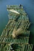 Myanmar (Burma), Bamboo raft on river - John McDermott