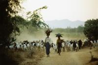 Myanmar (Burma), Bagan, Local women leading herd of goats. - John McDermott