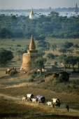 Myanmar (Burma), Bagan, Villagers in ox drawn carts along dirt roads with temples in backgrounds. - John McDermott