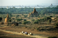 Myanmar (Burma), Bagan, Villagers in ox drawn carts along dirt roads with temples in backgrounds - John McDermott