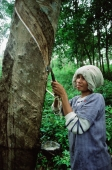 Thailand, Woman taps the sap from a rubber tree - John McDermott