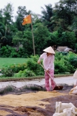 Vietnam, Mekong Delta region, Long Xuyen, Farmer drying out rice. - Steve Raymer