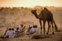 India, Rajasthan, Pushkar, Camel traders at the annual Pushkar fair cooking dinner. - Jill Gocher