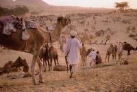 India, Rajasthan, Pushkar, General activity at the camel fair. - Jill Gocher