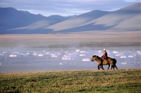 China, Szechuan (Sichuan), Kham region, Summer nomad festival, horseman in early morning near tent city. - Jill Gocher