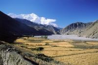 Nepal, Kagbeni, Summer grain crops, Annapurna mountains in background. - Jill Gocher