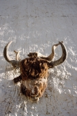 Nepal, Mustang, Buffalo head - symbol of Bonpo religion - Jill Gocher
