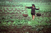 Vietnam, Hanoi, farmer walking through field - Alex Mares-Manton