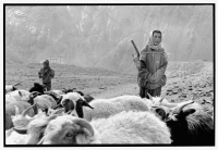 India, Northern India, Srinagar-Leh Road, Lamayuru Village, Boys shepherding sheep. - Mary Grace Long
