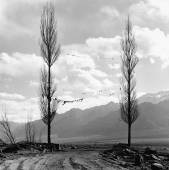 India, Ladakh, Leh, Prayer flags tied in between two trees, mountains at background. - Mary Grace Long