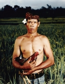 Indonesia, Bali, Ubud, Balinese rice farmer in rice field holding cock. - Martin Westlake
