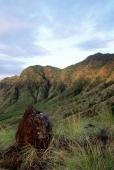 Indonesia, Bali, Pemutaran, View across West Bali National Park. (grainy) - Martin Westlake