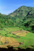 Indonesia, Bali, Abang, Rice fields. (grainy) - Martin Westlake