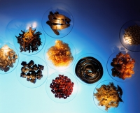 Various ingredients of Chinese medicine, like herbs, dried roots, fruits, animal parts - Carsten Schael