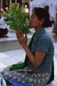 Myanmar (Burma), Yangon, Woman holding flowers, worshipping at Shwedagon Paya. - Martin Westlake
