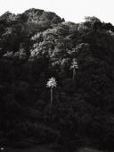 Rainforest vegetation at Tanjung Layar - Martin Westlake