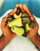Cashew nuts in the hands of Sri Lankan male - Martin Westlake