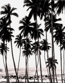 Towering coconut palms and sea view, early morning - Martin Westlake