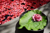 Flower sitting on petals and leaf at edge of tub filled with petals - Alex Mares-Manton