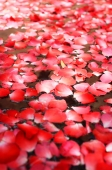 Flowers floating on water, close-up - Alex Mares-Manton