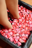 Woman with feet in bowl of water filled with flower petals, low section - Alex Mares-Manton