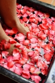 Womans feet in bowl of water filled with flower petals - Alex Mares-Manton