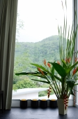 Flower arrangement next to window - Alex Mares-Manton