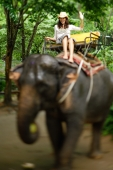Young woman riding elephant, waving, Phuket, Thailand - Alex Mares-Manton