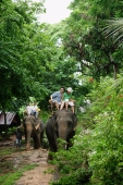 Tourists riding on elephant, Phuket, Thailand - Alex Mares-Manton
