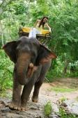 Female tourist riding elephant, Phuket, Thailand - Alex Mares-Manton