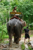 Female tourist riding an elephant, Phuket, Thailand - Alex Mares-Manton