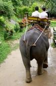 Couple riding elephant,  Phuket, Thailand - Nugene Chiang