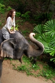 Young woman sitting on top of elephant, smiling, Phuket, Thailand - Alex Mares-Manton