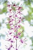Wild Orchid flowers - Alex Microstock02