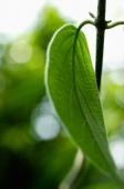 Tropical plant leaf on a stem - Alex Microstock02